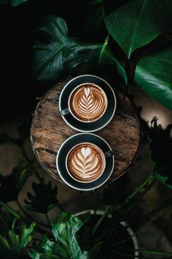 urban jungle koffietafeltje